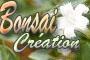 bandeau du site Bonsaï Création