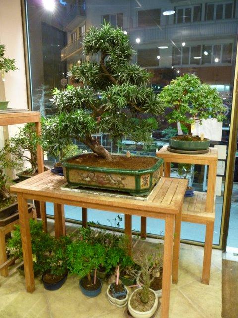 bonsa cr ation rencontre avec paris bonsa. Black Bedroom Furniture Sets. Home Design Ideas