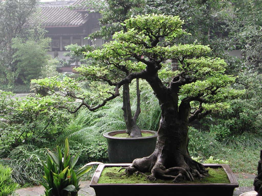www.bonsai-creation.com